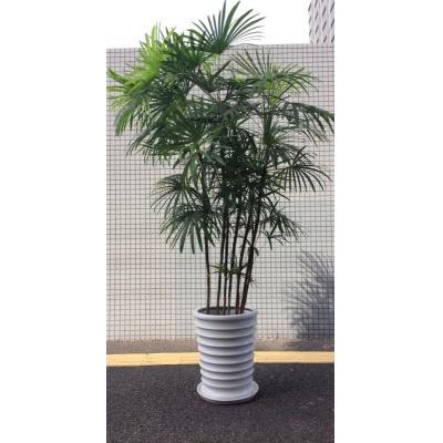 画像1: 観葉植物 大鉢