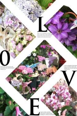 母の日の愛あるお花(店頭販売:鉢苗)